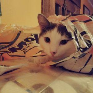 Jake Cat