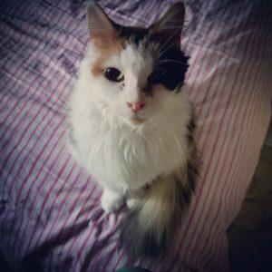 Elda Cat