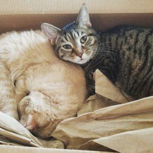 Ruffy & Archie Cat