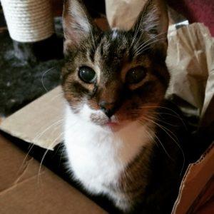 Pudd Cat