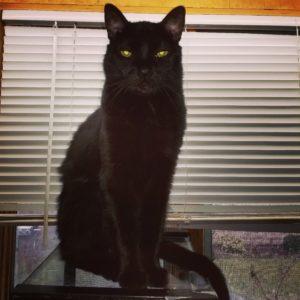 Tripp Cat