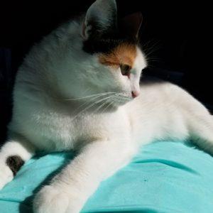 Mao Cat